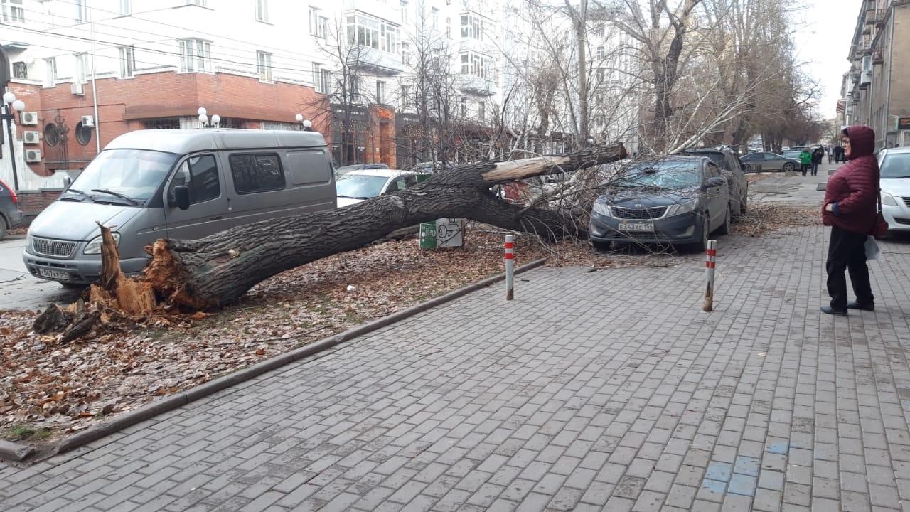 А в Железнодорожном районе города у кукольного театра на улице Ленина ветер повалил дерево