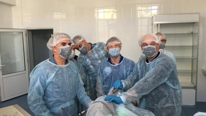 Ветврач из Кургана научит европейских специалистов лечению животных с помощью эндоскопии