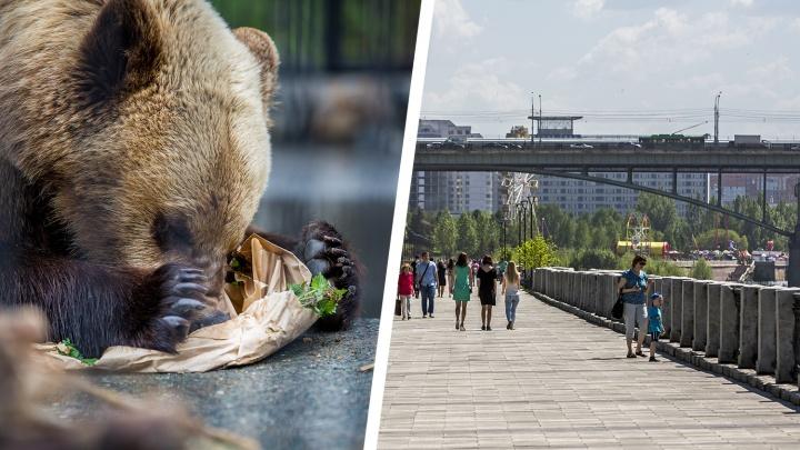 Новосибирцам запретили дразнить медведей на Михайловской набережной