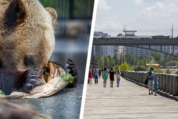 Медведей на Михайловской набережной ещё никто не видел, но дразнить их уже запрещено