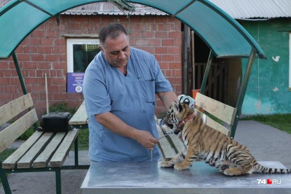Ветеринар говорит, что Гектор в основном лежит и мяукает, но недавно съел первый кусок мяса