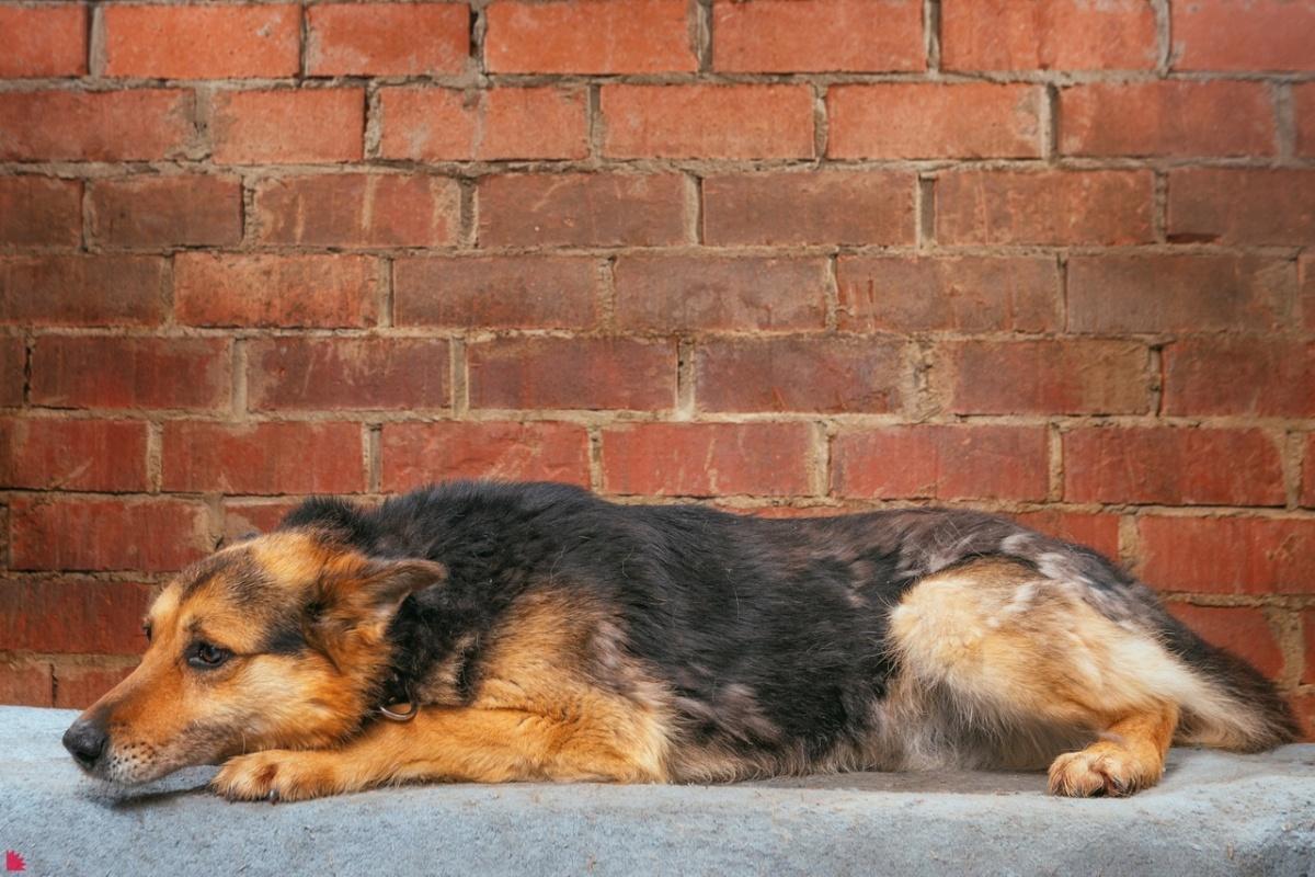 Пса зовут Красавчик (и с этим не поспоришь)