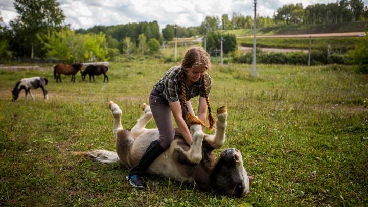 Урчат и обнимаются: милый репортаж с фермы, где воспитывают пони (они как котики-гиганты)