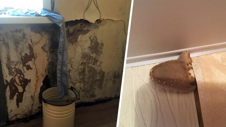 «Крыша течет третий год»: из-за постоянной сырости в квартире самарцев выросли грибы