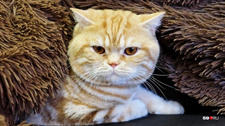 «Они порезали мою кошку!»: пермячка обвинила приют «Матроскин» в «диком» обращении с животными