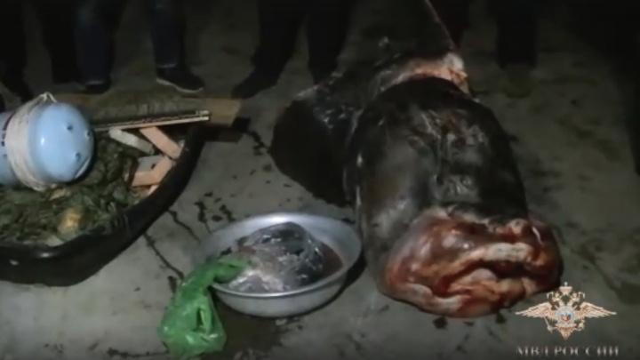МВД России: в Волгограде выловили 300 килограммов краснокнижной рыбы на 15 миллионов рублей