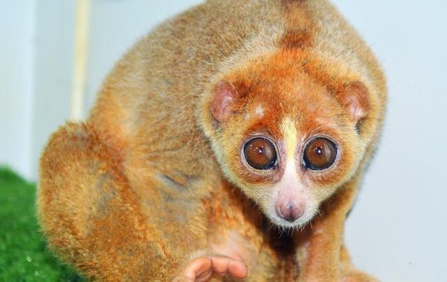 Забавные обезьянки приглашают уфимцев в гости