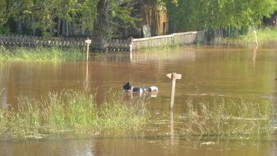 В Юрле эвакуировали жителей, Кудымкар ждёт большую воду. Хроника разрушений второго дня паводка