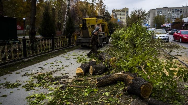 Возле Центрального парка спилили старые клёны