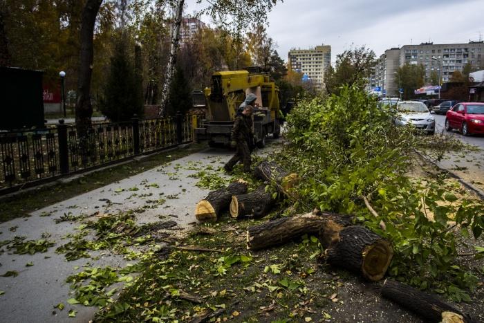Аварийные деревья возле парка начали спиливать сегодня