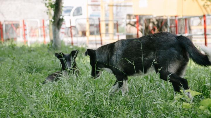 В Самарской области запретили стрелять по бездомным животным