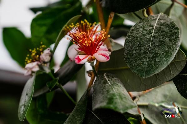 На экскурсии можно увидеть экзотические растения. Какие их них цветут даже осенью, можно узнать во время прогулки по ночному саду