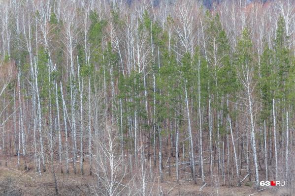 Прогулки в лесу самарцам пока придется отложить