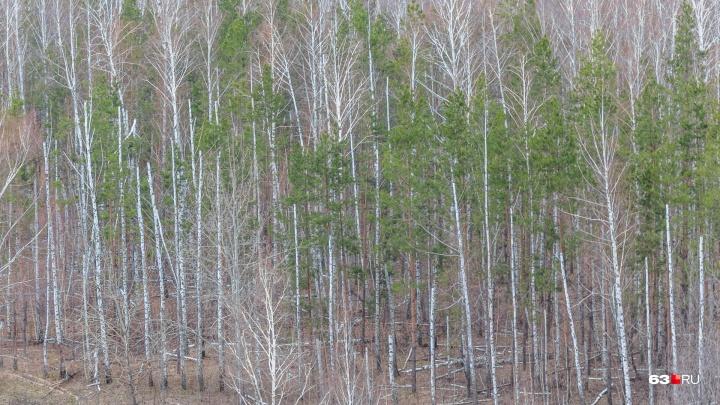 Жителей Самарской области будут штрафовать за нахождение в лесу