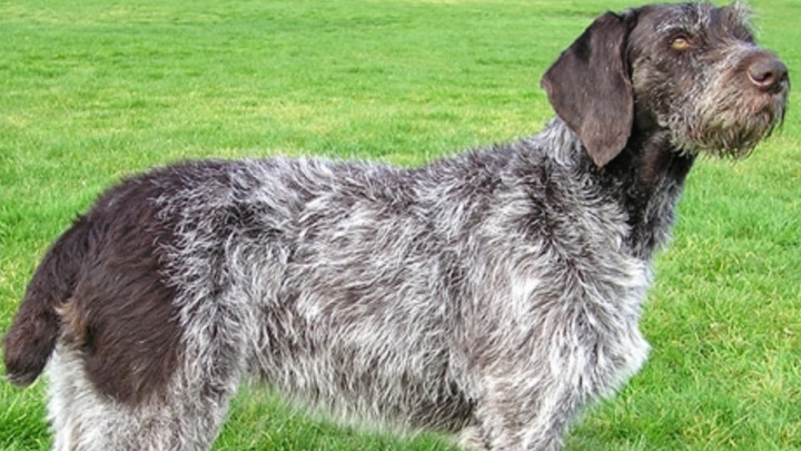 «Собака обучена носить мертвую дичь»: хозяин пса, покусавшего малыша на Уралмаше, объяснил нападение
