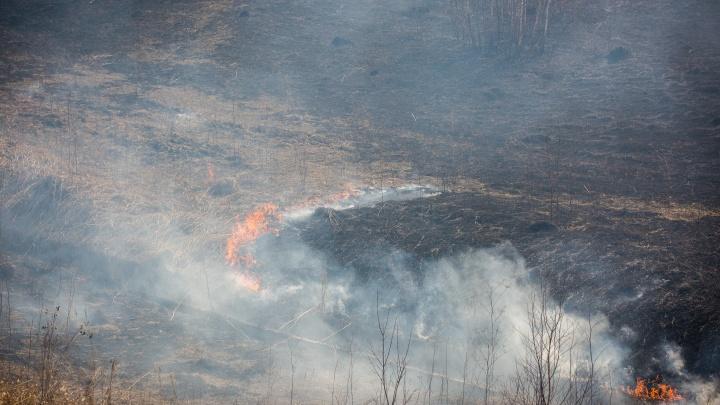 Осторожно с шашлыком: МЧС предупредило об опасности лесных пожаров под Новосибирском
