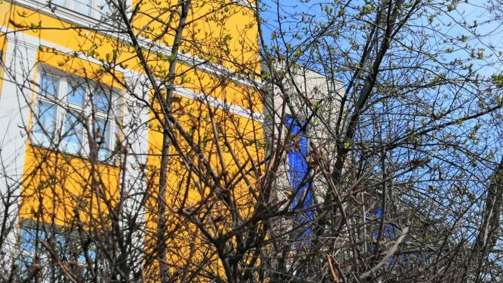 Нежные листочки и первые цветы: любуемся просыпающейся природой Красноярска