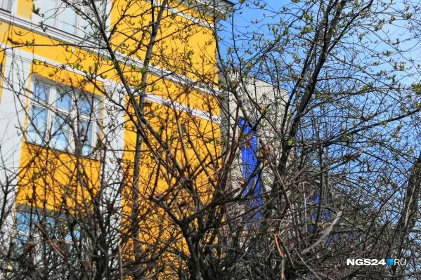 Первые листочки на дереве, которое растет на проспекте Мира