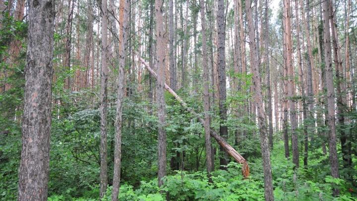 В лесу под Екатеринбургом нашли убитым охотника