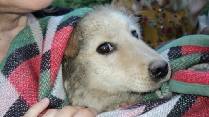 Новосибирцы нашли хозяев псу Мише, который 2 месяца прожил в подземелье
