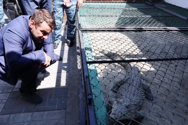 Крокодил живет в колонии уже 10 лет