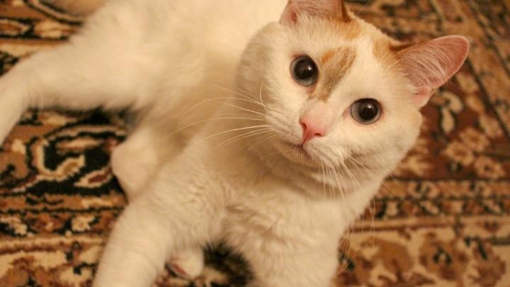 Хозяйка три года держала кота на привязи. Его спасли волонтеры и теперь ищут ему хозяев