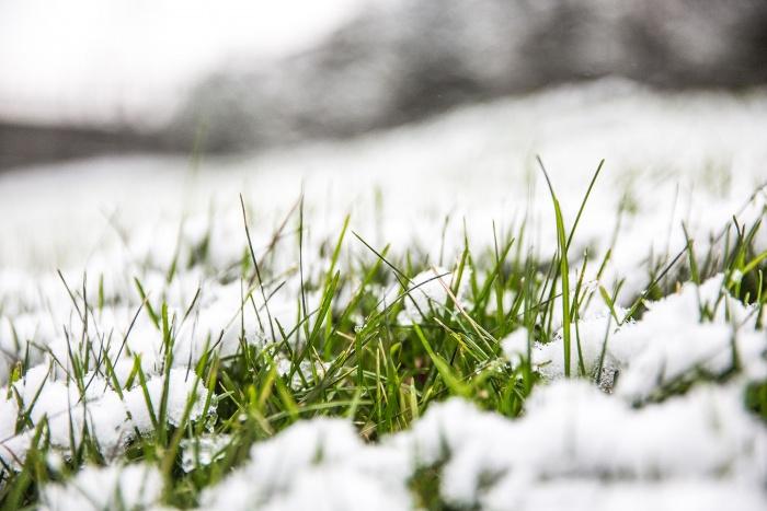 Самый высокий снежный покров достигал в Маслянино 7 см