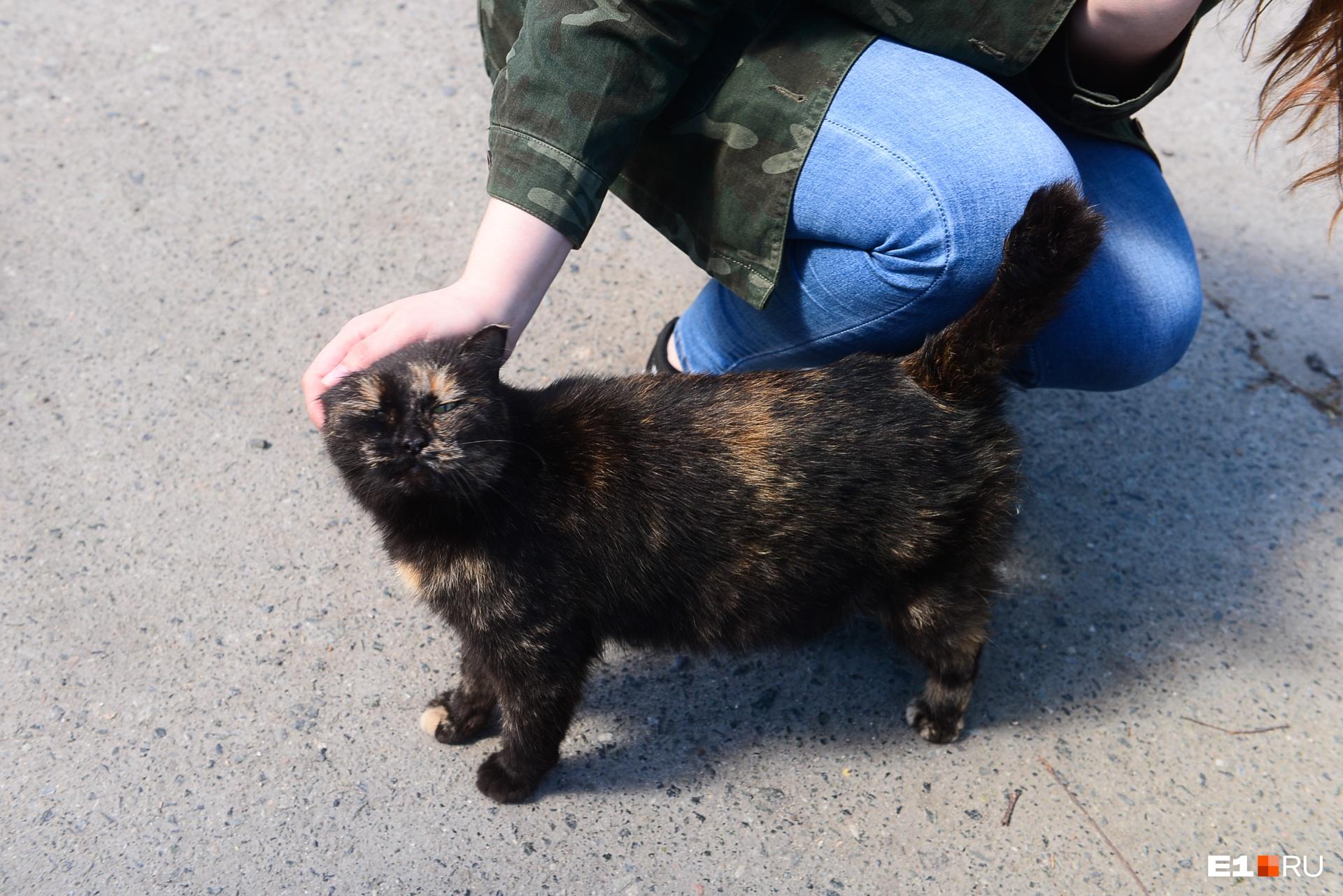 Местную кошку Бармалея мы тоже затестили: классная!