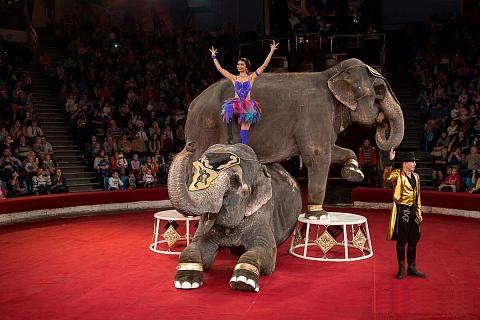 В День города по Омску будут гулять индийские слоны