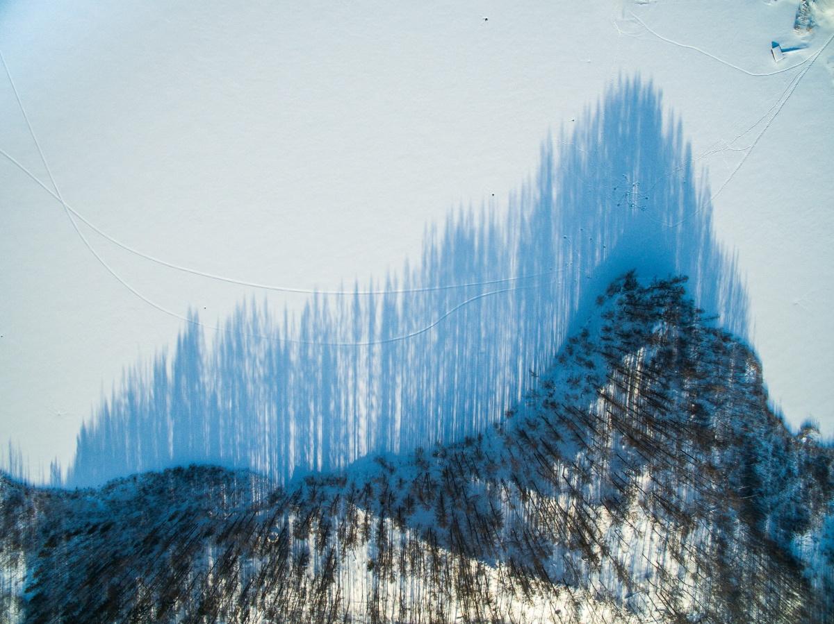 Тени деревьев в Увельском районе напоминают акустическую волну