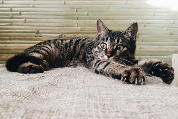 Сейчас кот живёт у волонтёров