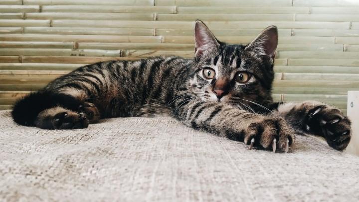 Котику Ёши нашли попутчика из Китая — зверька привезли в Новосибирск перед Новым годом