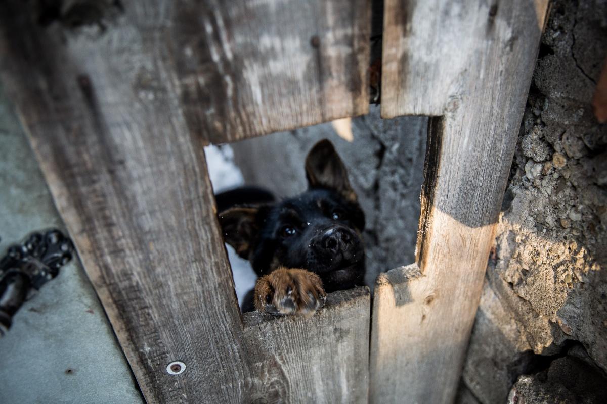Многим домам в этой части Большой по сотне лет, живут в них поколениями —в том числе и собачьими