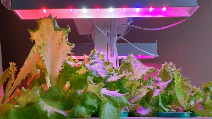 Пора рассады: выбираем светильник для самого богатого урожая