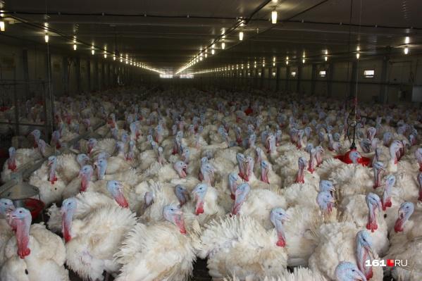 Сейчас выясняется причина вспышки птичьего гриппа на «Евродоне»