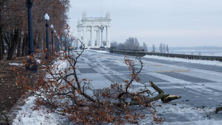 «Осталось вывезти всю грязь»: в Волгограде«расчехлили» вырубленный парк на Центральной набережной
