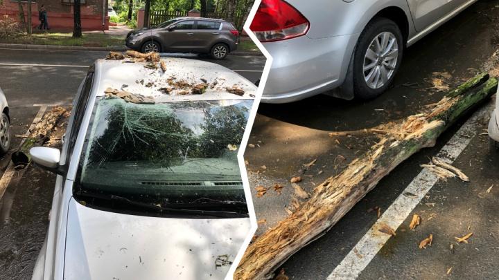 Ярославец отсудил у мэрии больше 100 тысяч за упавшее на авто дерево