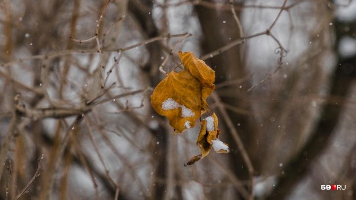 МЧС предупреждает пермяков о заморозках