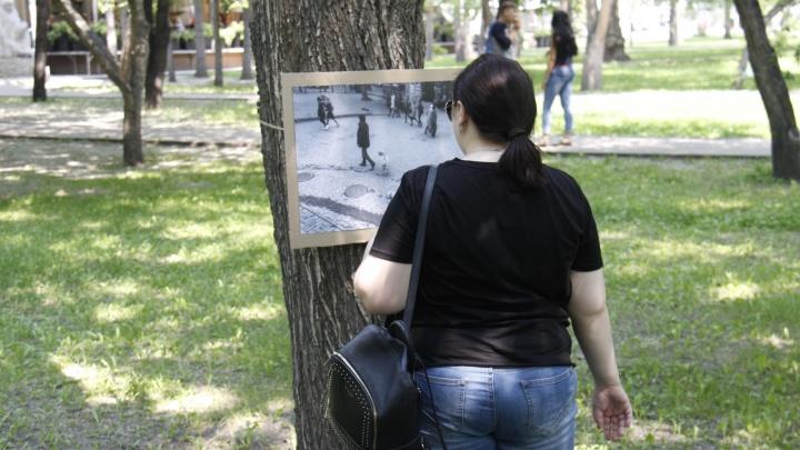 На деревья в Первомайском сквере повесили чёрно-белые фотографии