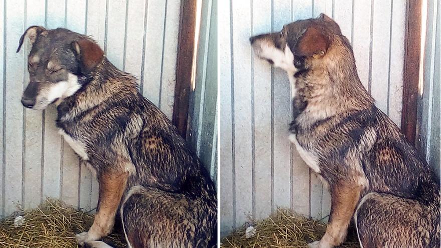 Тюменские спасатели помогли двум животным. Котик упал в водоём, а пёсик рухнул в колодец