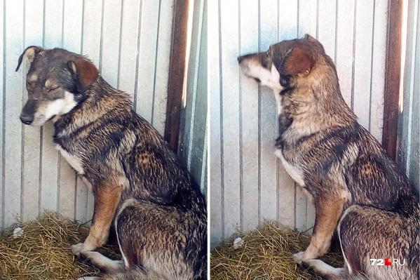 Посмотрите на эту миленькую собаку. Именно она упала в колодец, и ее достали спасатели