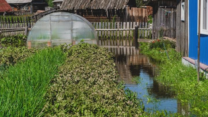 По 15 тысяч на огород. Жителям Прикамья, пострадавшим от паводка, обещают выплатить компенсации