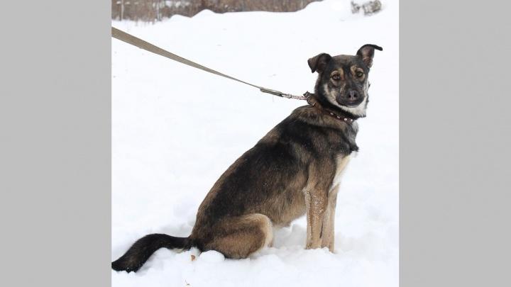 Из первого пёсокафе Новосибирска пропала собака