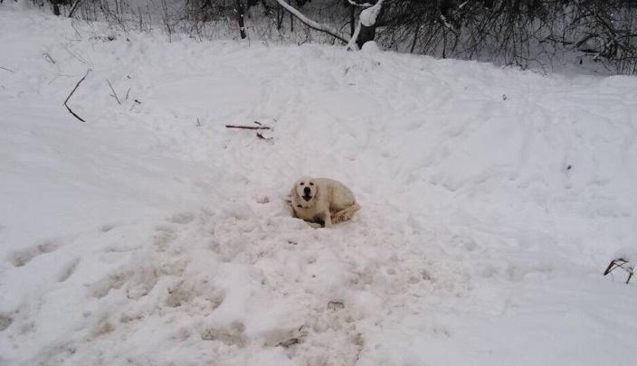 «Я покажу всем этих нелюдей»: ярославский депутат приютил собаку, которую выкинули на дорогу
