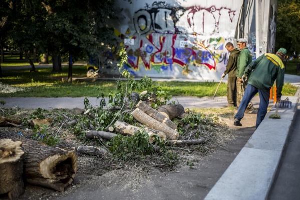 Пока под вырубку попали только два дерева, ещё двум сделали санитарную обрезку