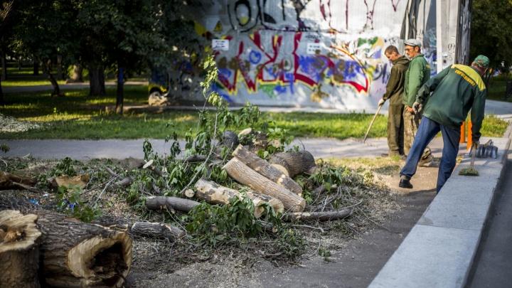 Щепки полетят: в мэрии рассказали о планах снести 162 дерева в Первомайском сквере