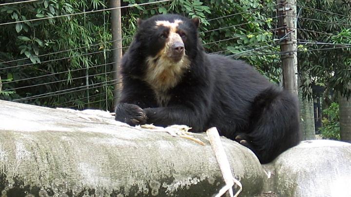 Зоопарк сделает вольеры с водопадами для новых медведей