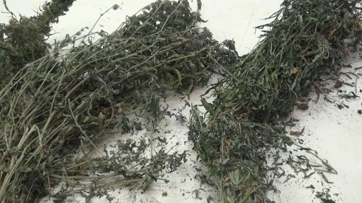 Богатый урожай: жителя Ярославской области поймали с целым мешком наркотиков