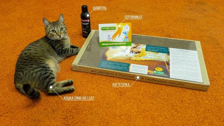 Котики-близнецы: рассматриваем победителей конкурса двойников редакционной кошки E1.RU