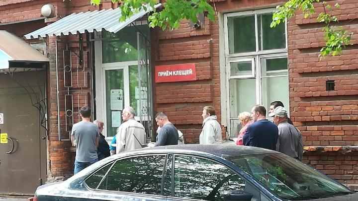 За три недели жителей Ярославской области тысячу раз укусили клещи: сколько из них заражённых